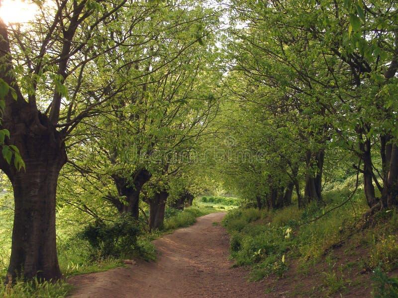 大道被排行的结构树 免版税库存照片