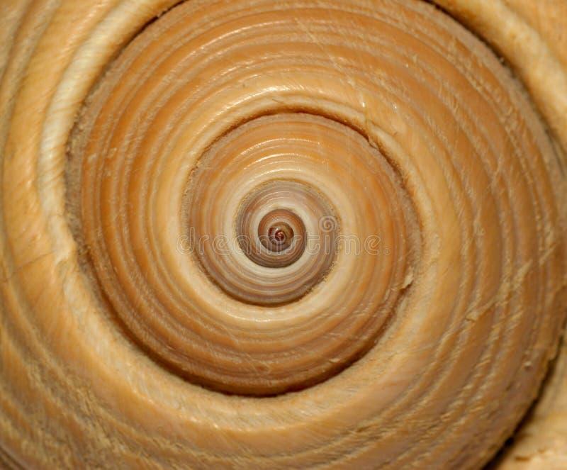 大金银细丝工的希腊壳蜗牛螺旋 免版税库存照片