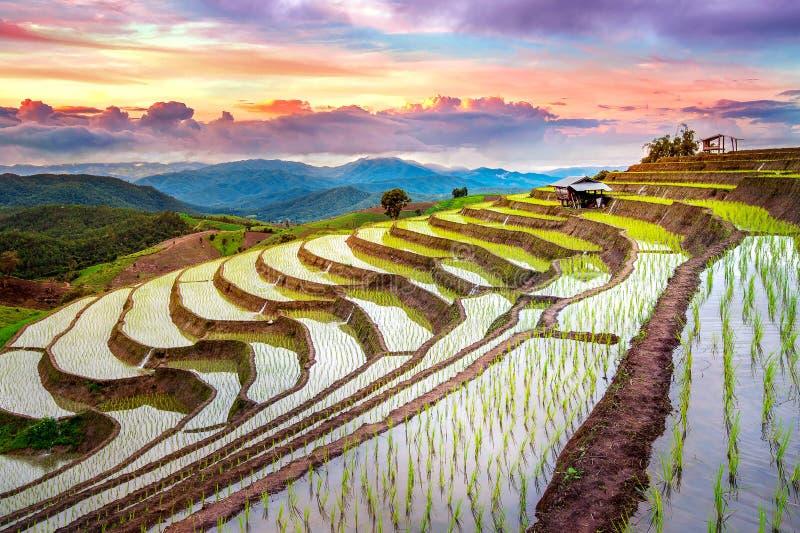 大阳台禁令pa的米领域在Chiangmai发出当当声piang 免版税库存照片