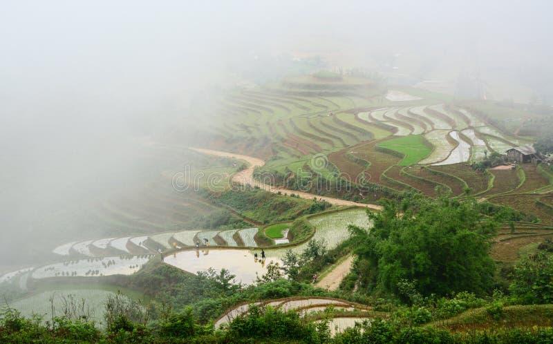 大阳台米领域在Sapa灌溉季节 免版税库存照片