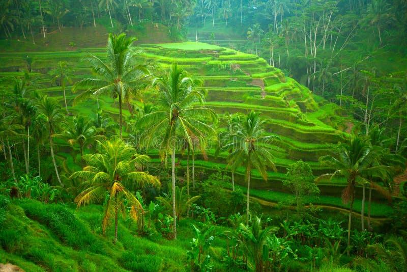 大阳台米领域 库存照片