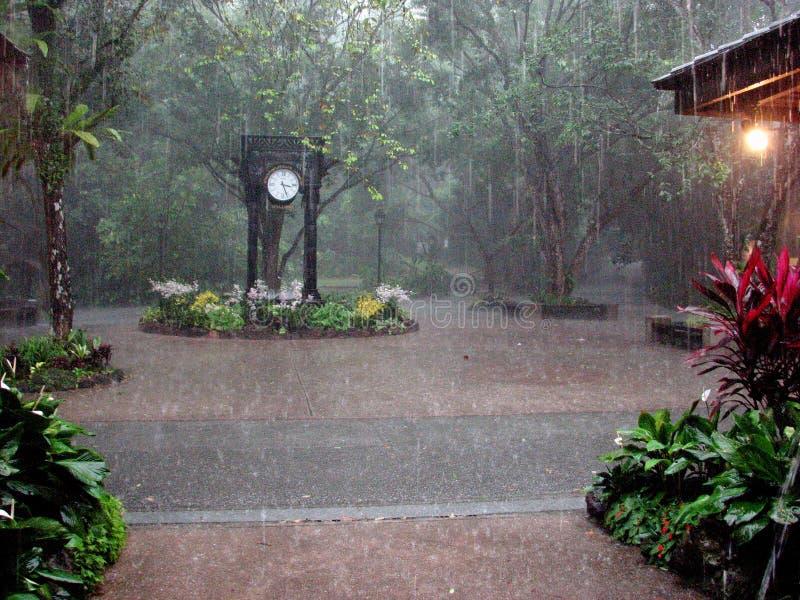 大雨在兰花庭院新加坡里 库存图片