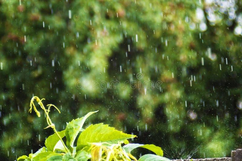 大雨,反对树的垂直的下落 库存图片