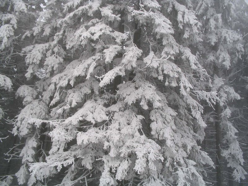 大雪结构树 图库摄影