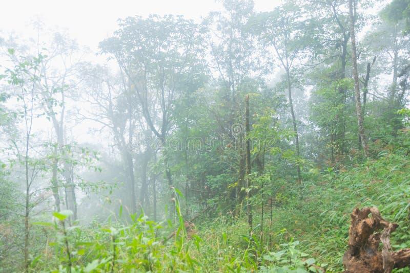 大雾、云彩和薄雾在热带雨林在星期一jong doi在蔡恩mai 免版税库存照片