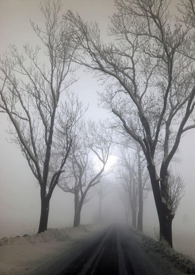 大雾结构树 库存照片