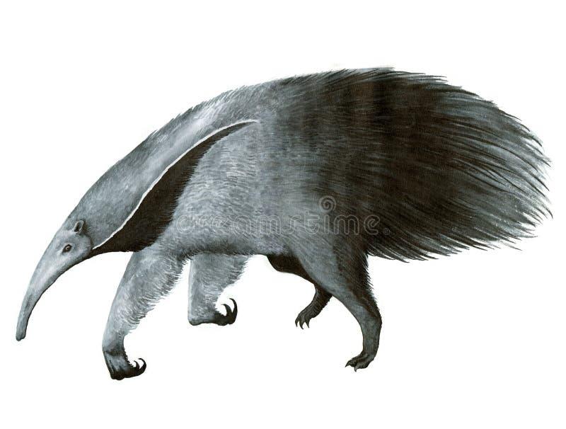 大食蚁兽墨水手图画例证 库存例证