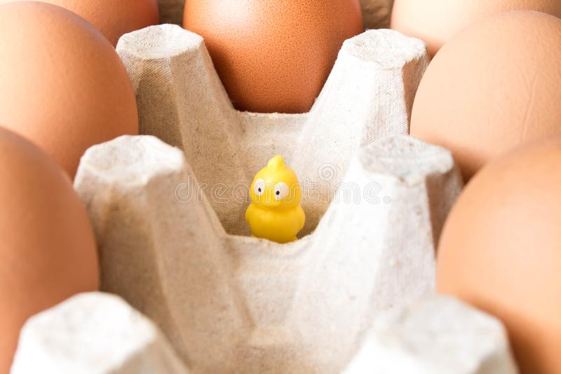 大鸡在纸板箱和一只小黄色玩具小鸡怂恿 图库摄影