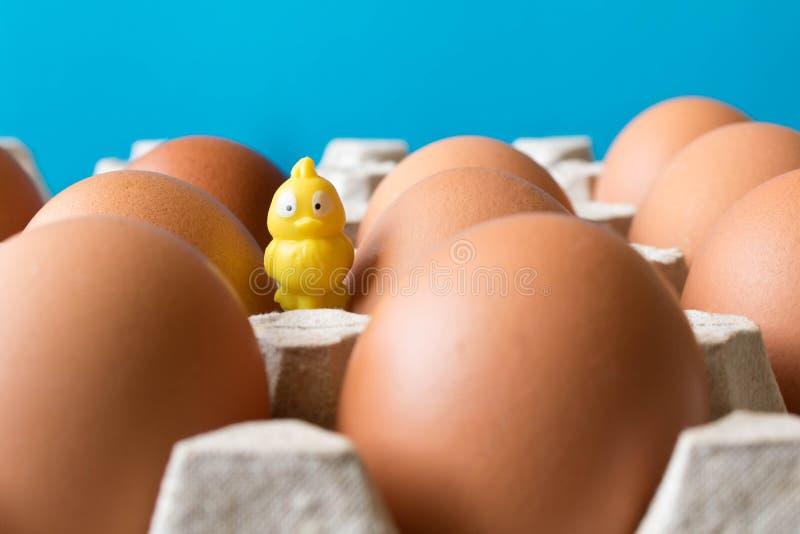 大鸡在纸板箱和一只小黄色玩具小鸡怂恿 免版税库存图片