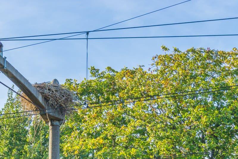 大鹳筑巢在杆的修造在电缆之间的火车铁路 免版税图库摄影