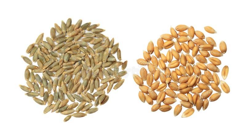 大麦和麦子 库存照片