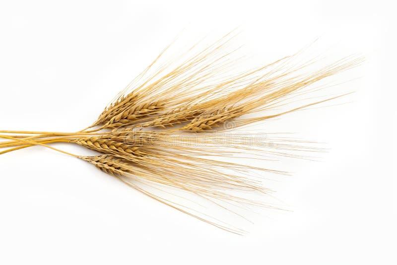 大麦束 免版税库存照片