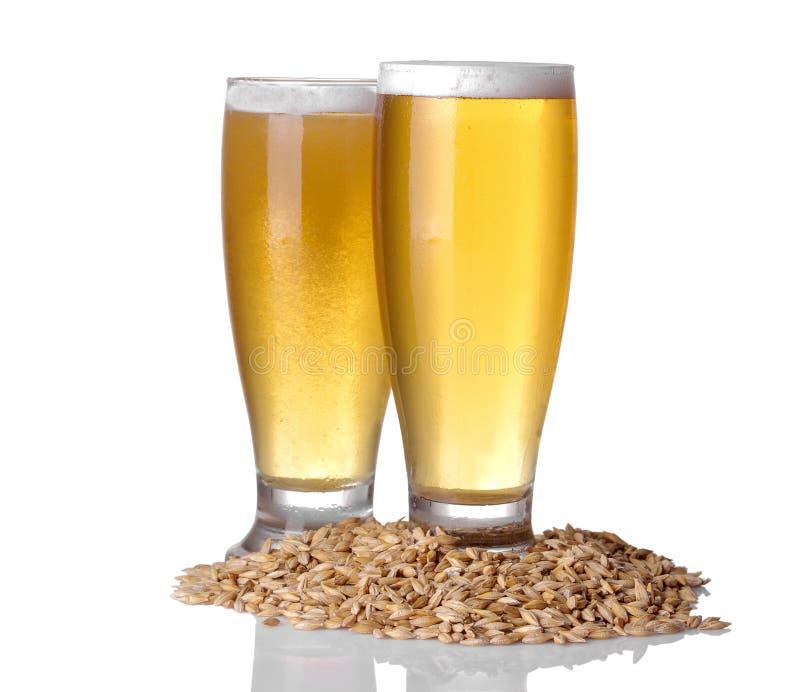 大麦杯与泡沫的低度黄啤酒和五谷在白色的隔绝了背景 库存图片