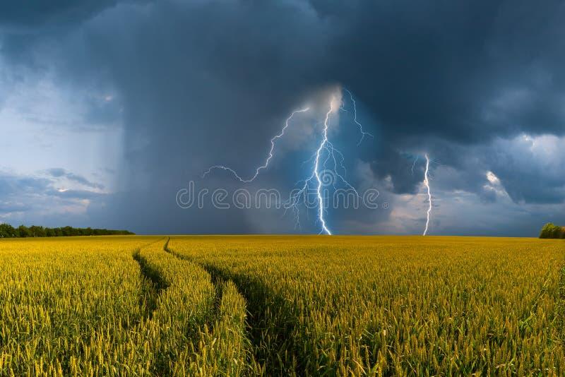 大麦田和雷暴 库存照片