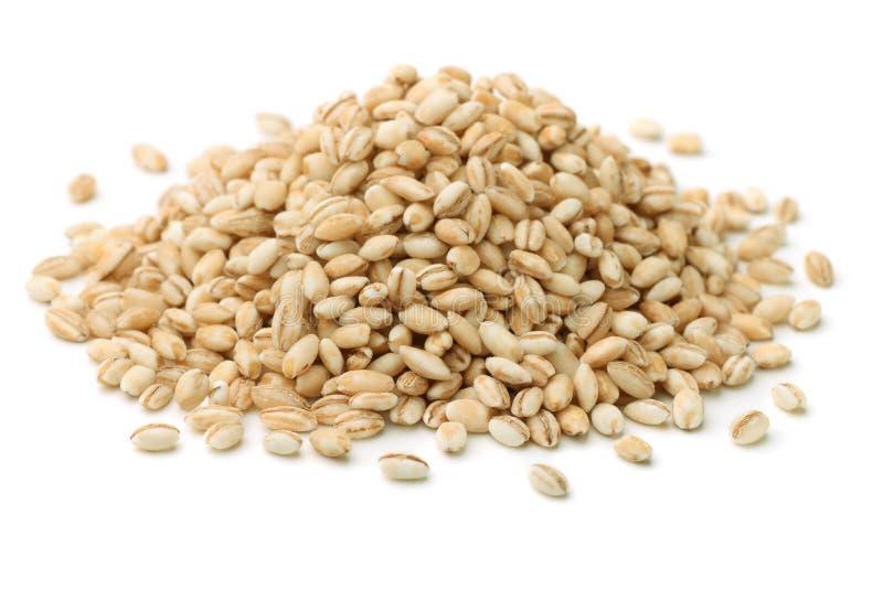 大麦米 免版税库存图片