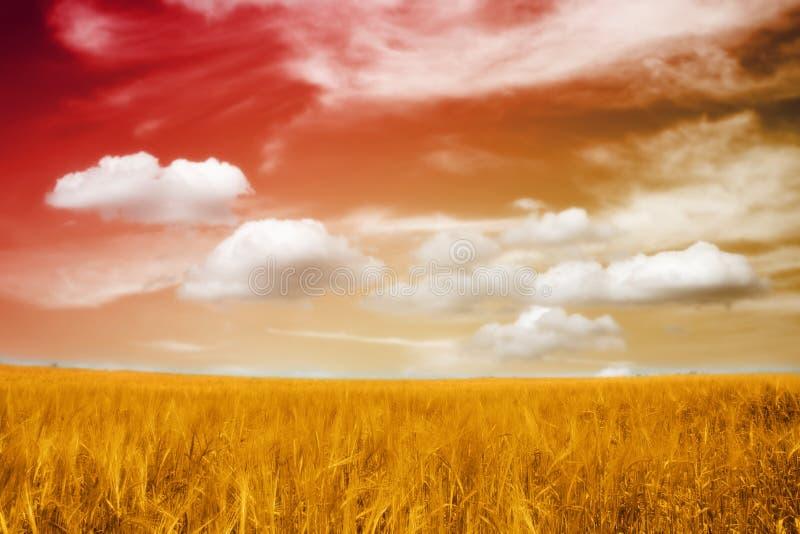 大麦美好的域日落 库存照片