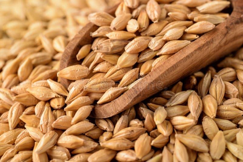 大麦设计谷物纹理 免版税库存图片
