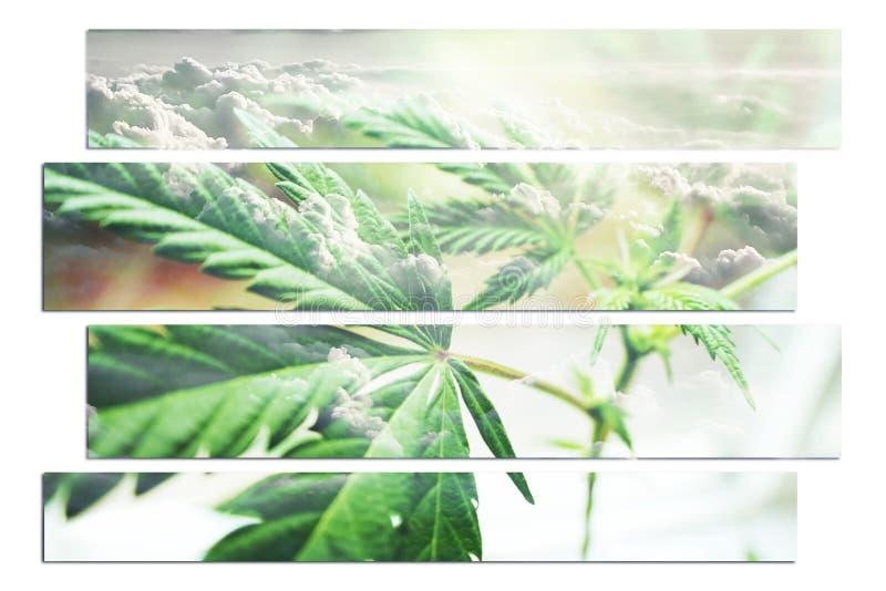 大麻与云彩的厂艺术在背景中 库存图片