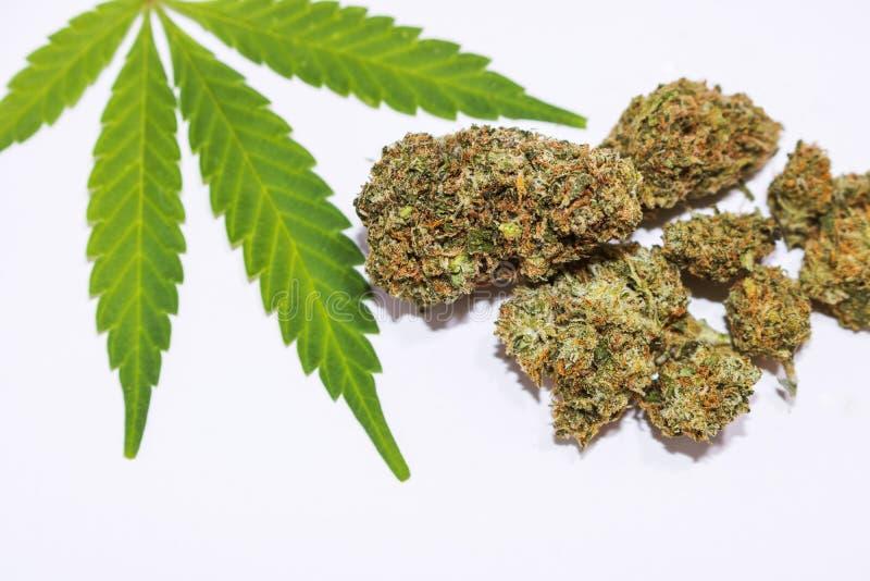 大麻发芽接近与在白色背景的大麻叶子 免版税图库摄影