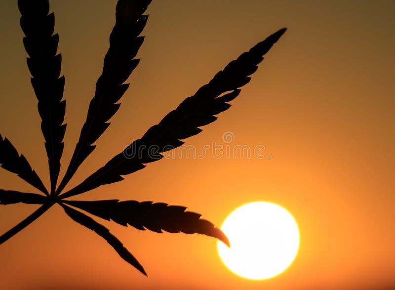 大麻叶子的剪影在日落的 库存照片