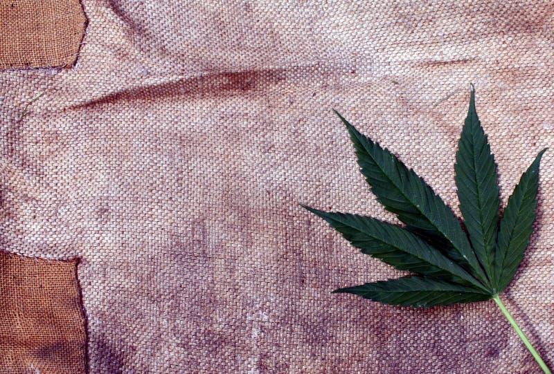 大麻大麻叶子和粗糙的肮脏的难看的东西帆布背景 免版税图库摄影