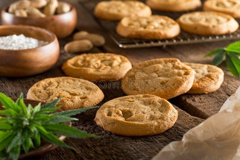 大麻曲奇饼 库存图片