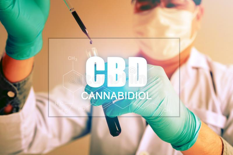 大麻油,CBD概念,化学家通过综合与使用吸管的化合物做试验在试管 库存照片