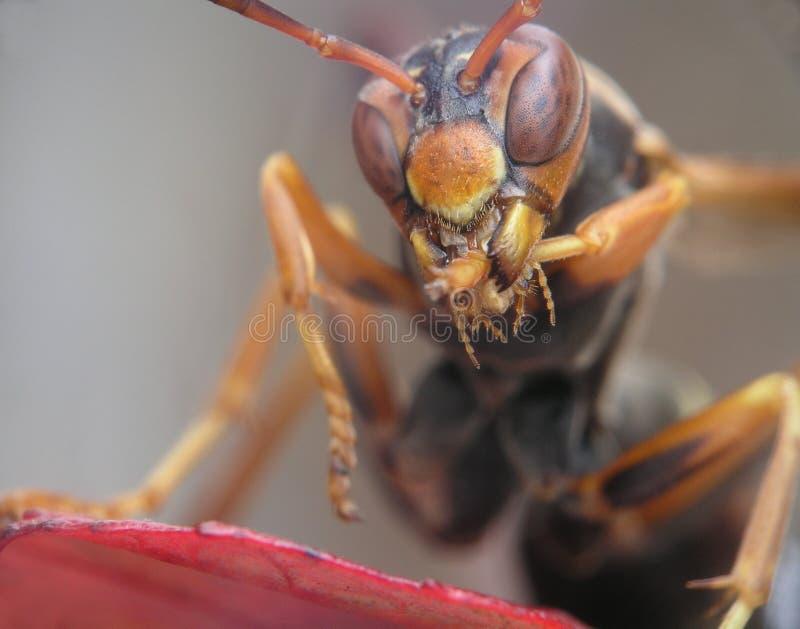 大黄蜂叶子 库存照片