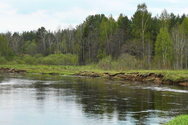 大水在早期的春天 免版税库存图片