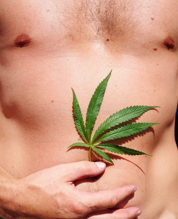 大麻大麻叶子以男性身体为背景的 库存图片