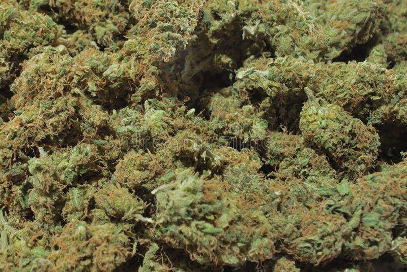 大麻 免版税库存图片