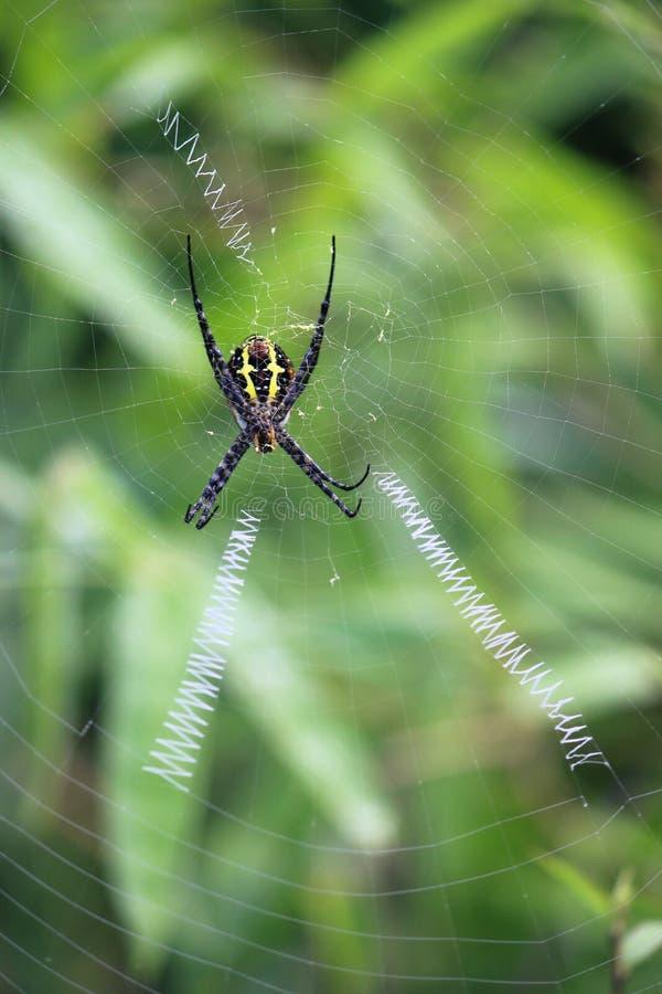 天体织布工蜘蛛 图库摄影