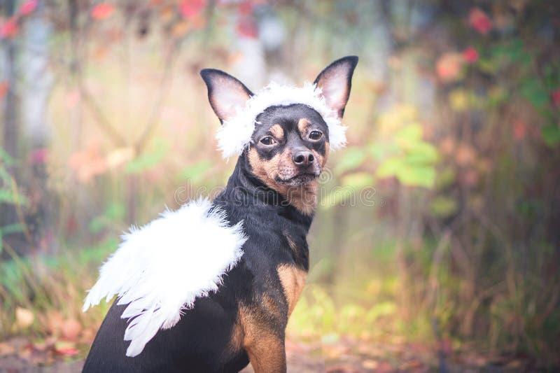 天使狗,一条狗的画象在一个天使的图象的,在wrea 库存照片