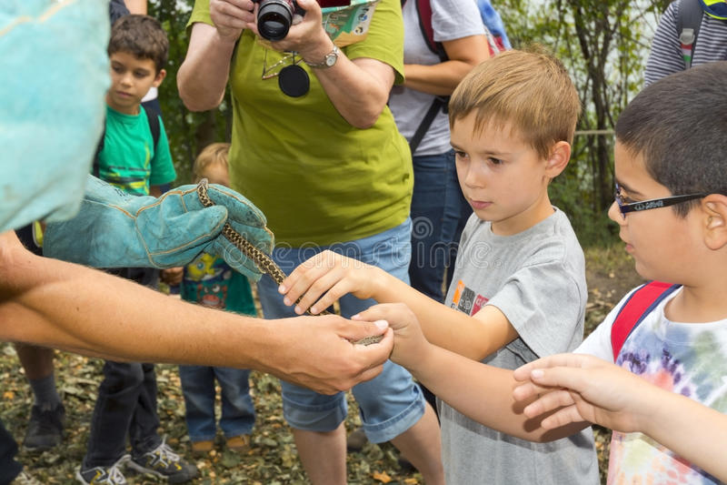 天匈牙利草甸蛇蝎在塞格德 免版税库存图片