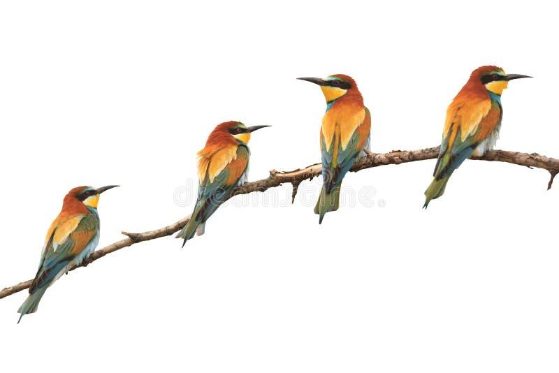 天堂上色了鸟坐分支被隔绝的白色 图库摄影
