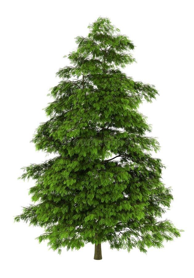 天堂查出的结构树白色 向量例证