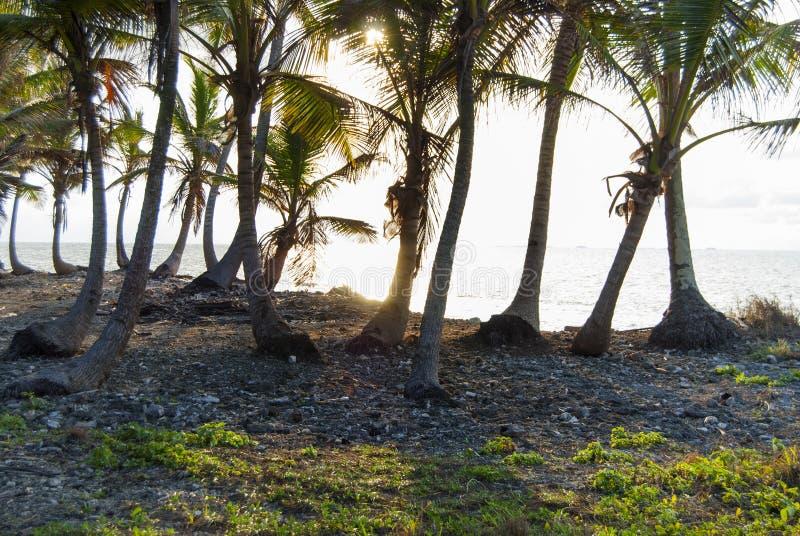 天堂海岛在雅拉库纳族自治区, Kuna Yala,圣布拉斯,巴拿马 日落 日出 库存照片