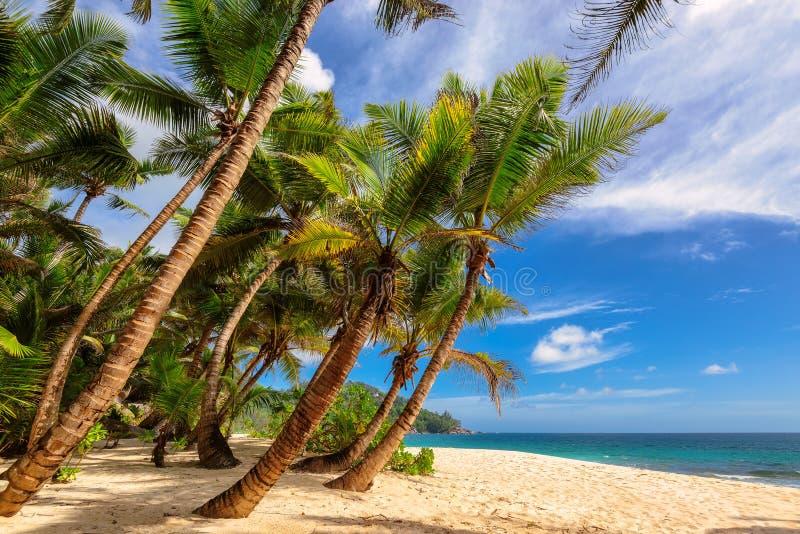 天堂Anse在马埃岛,塞舌尔群岛的监督海滩 免版税库存照片