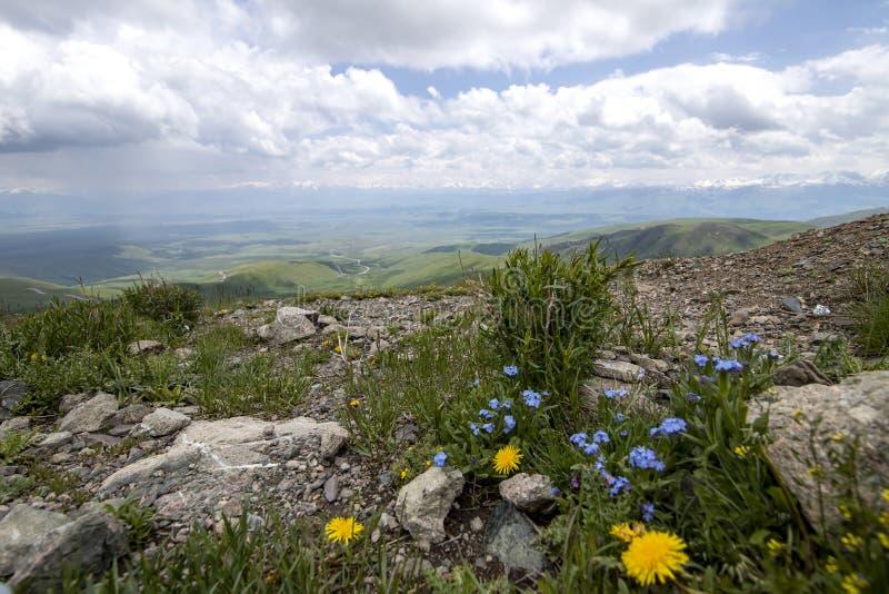 天山中部的山的看法在有开花的花的吉尔吉斯斯坦 免版税库存图片