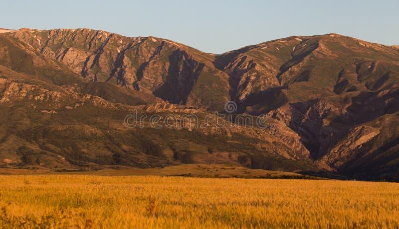 天山的美丽的山在哈萨克斯坦排列 图库摄影