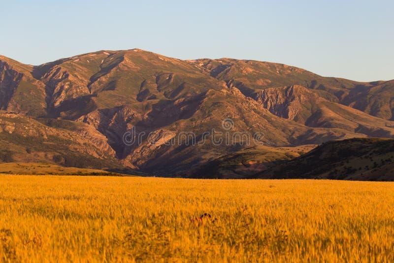 天山的美丽的山在哈萨克斯坦排列 库存图片