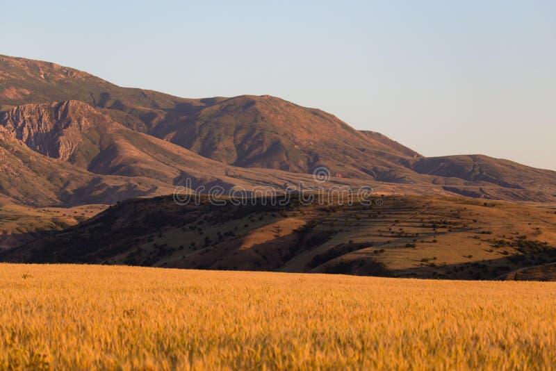 天山的美丽的山在哈萨克斯坦排列 免版税图库摄影