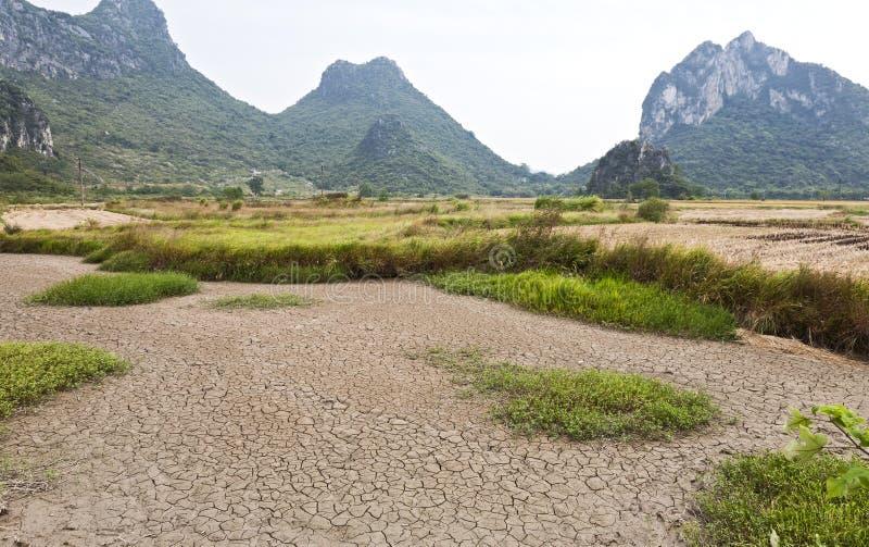 天旱种田米 库存图片
