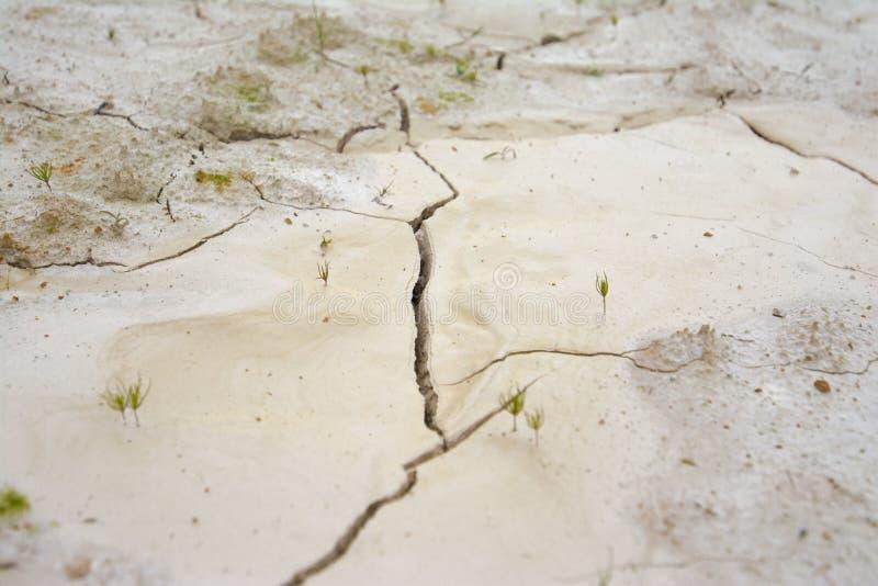 天旱,地面崩裂,没有热水,缺乏湿气 免版税库存照片