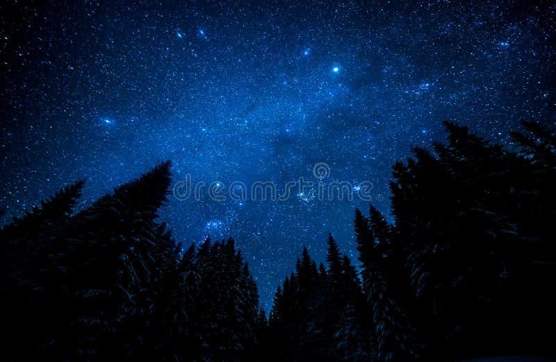 满天星斗的天空在夜森林里 免版税库存图片