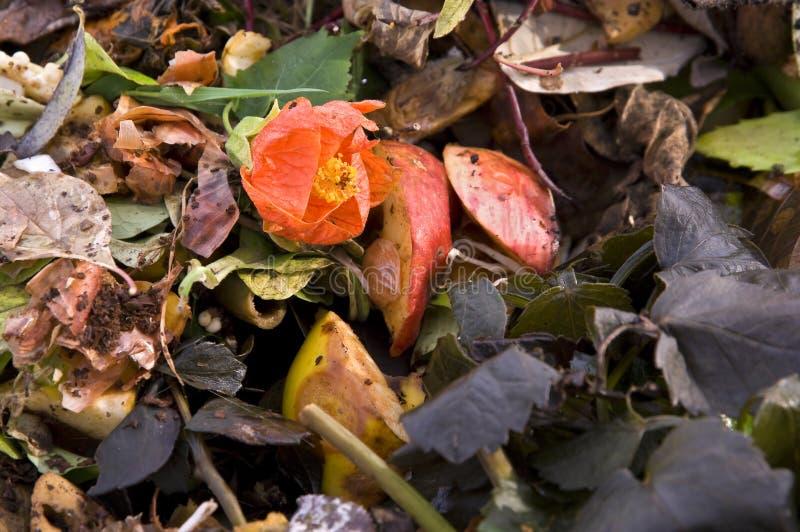 天然肥料花堆 库存图片