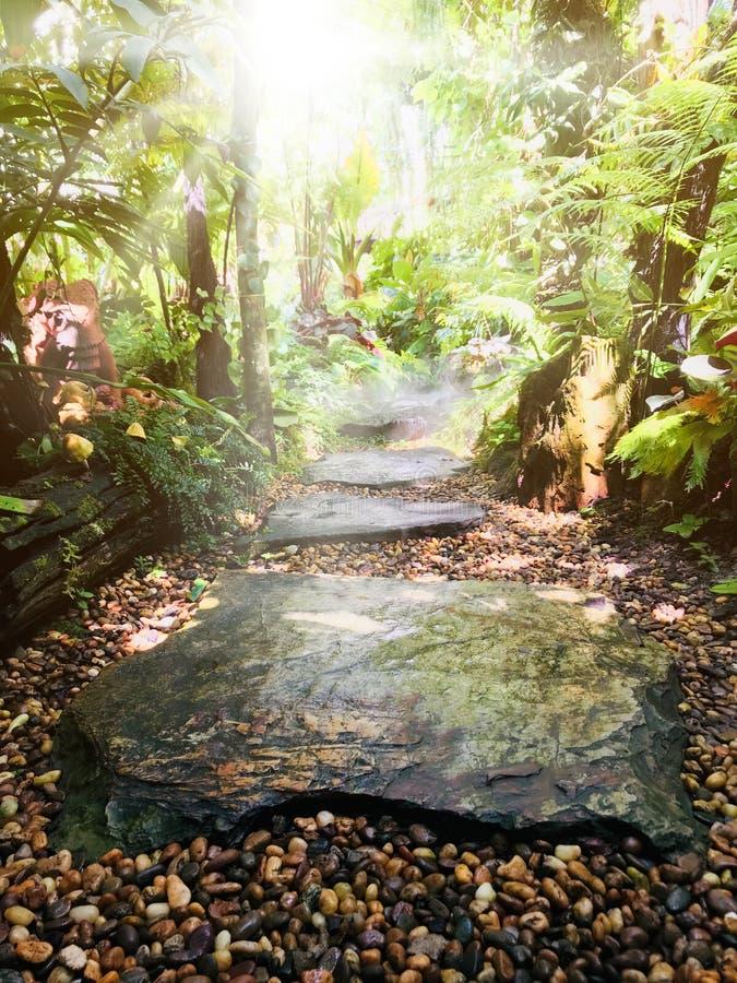 天的重新开始和休闲在绿色庭院里 库存照片