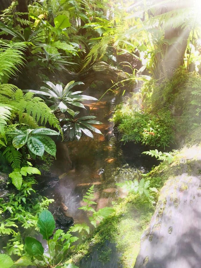天的重新开始和休闲在绿色庭院里 库存图片