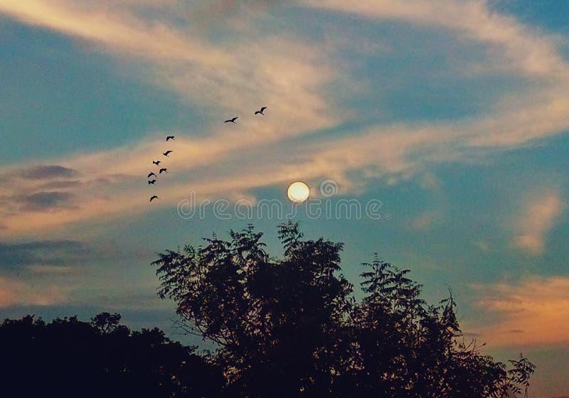天空、云彩、月亮、鸟和树的一个说明图象 皇族释放例证