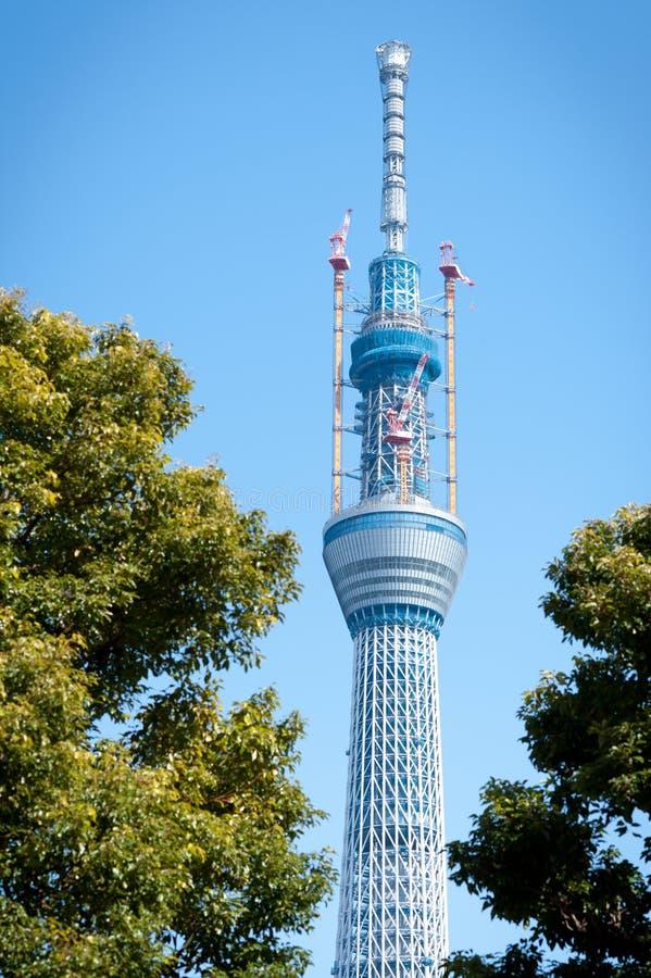 天空东京结构树 图库摄影